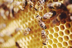 Miel, propolis, pollen, gelée royale, venin d'abeille, les produits de la ruche