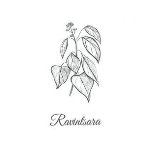 Petit Grain Bigarade ou de Ravintsara pour lutter contre le stress et la fatigue