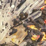 Arsenicum album : Épuisement, anxiété et troubles digestifs