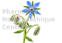 BOURRACHE en vrac (Borago officinalis)