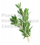 Rosmarinus officinalis bourgeon - romarin officinale